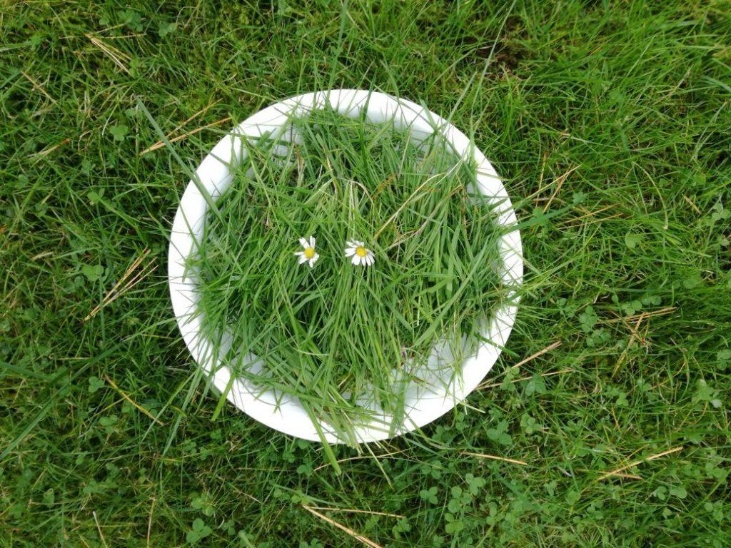 ein teller voller frisch gepflücktem gras