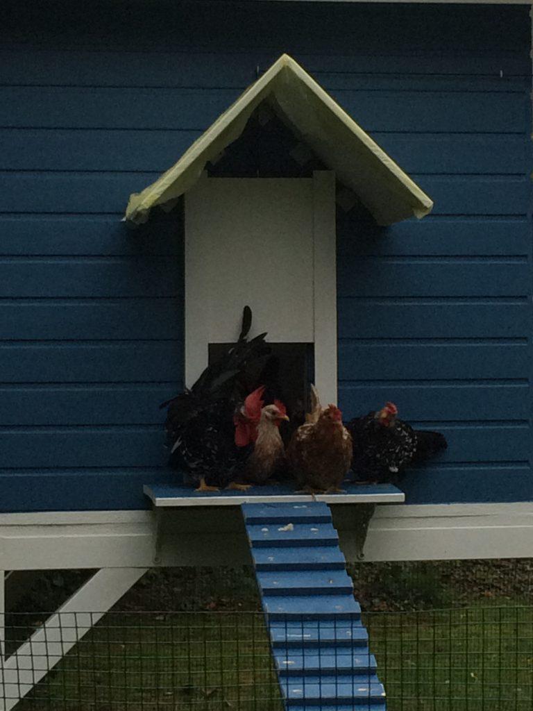 mehrere hühne sitzen auf der plattform vor der hühnerleiter